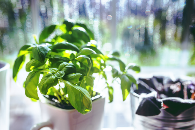 A Herbal Affair - The Top 3 Tips For Herb Gardening Success