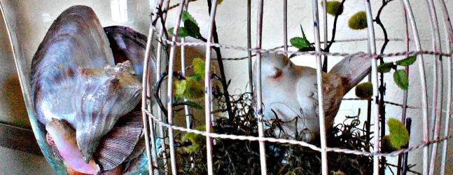 seashells and birdcage