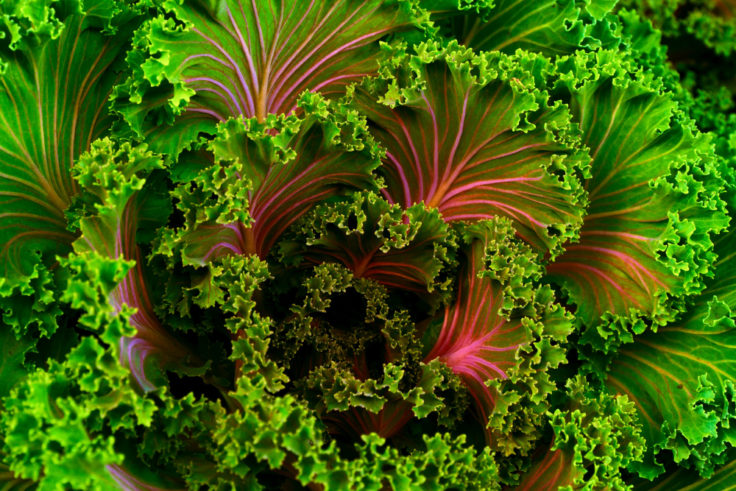 Organic Vegetable Gardening ~ 3 Tips For Success